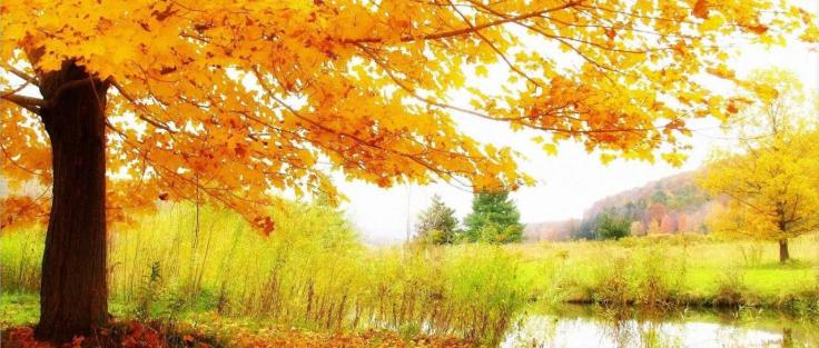 paisagem-outono-wallpaper-1280x720